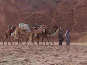 kamelen woestijnreis