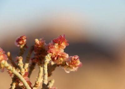 4 bezinningsreis Jordanie Wadi Rum