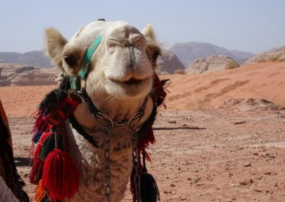 retraite woestijnreis Jordanie